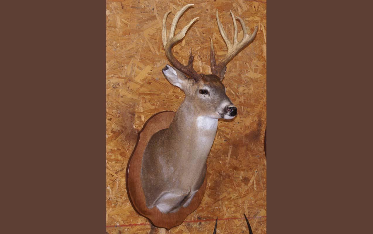 buck head displayi...