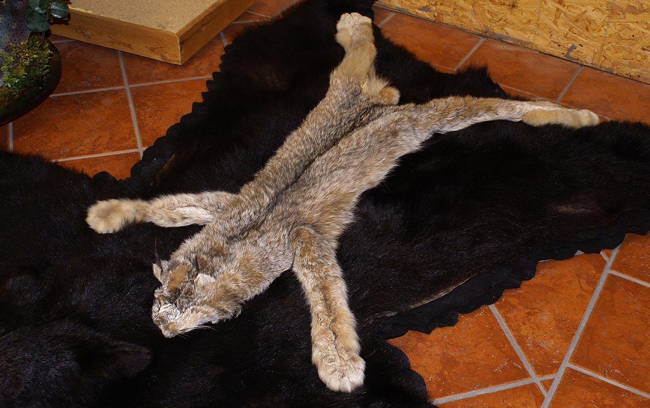 Lynx Pelt On Bearskin